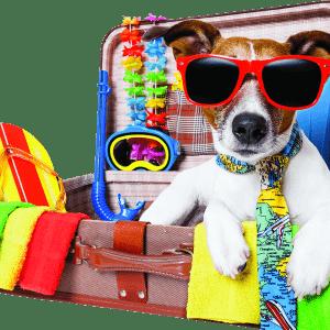 PETport Animal Travel Services | Transporting Pets across SA
