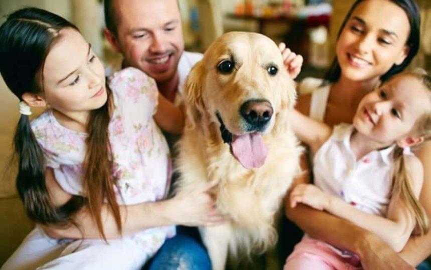 home-deliveries-for-pet-transport